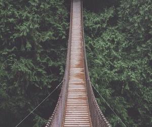 bridge, nature, and green image