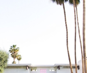 hipster, palm trees, and photography image