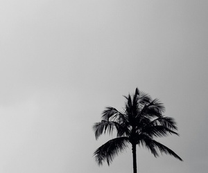 black and white, palm trees, and beach image