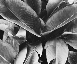 black, nature, and plants image
