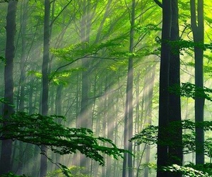 forest, naturaleza, and green image