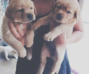 dogs, puppy, and cute image
