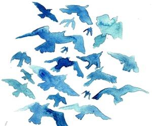 bird, blue, and top image