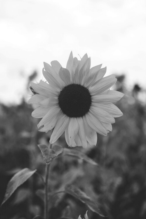 Image about photography in life by loa on we heart it flowers sunflower and nature image mightylinksfo
