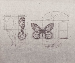butterfly, golden ratio, and phi ratio image
