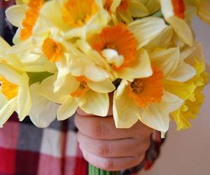 yellow and daffodills image