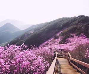adventure, beautiful, and explore image