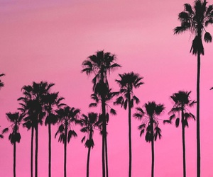 pink, palm trees, and wallpaper image