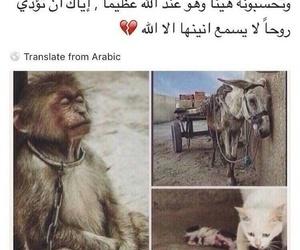 حيوان, ﻋﺮﺑﻲ, and جرحً image