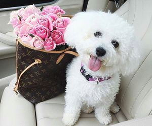 dog, animal, and fashion image
