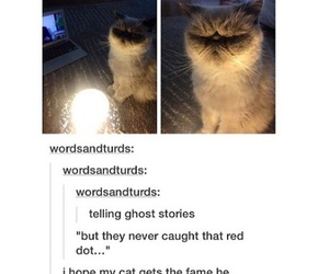 cats, funny, and red dot image