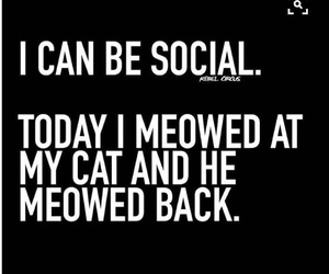 cat, social, and funny image