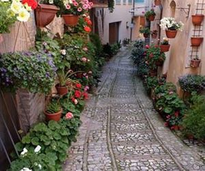 flowers, beautiful, and travel image
