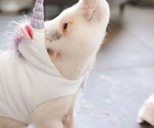 pig, unicorn, and cute image