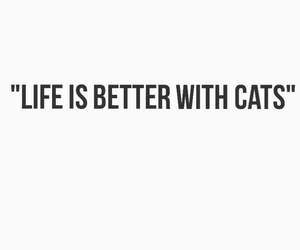 cat, cats, and quote image