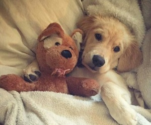 puppy, adorable, and cuddle image