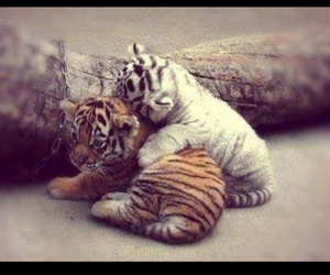 hug, cute, and animal image