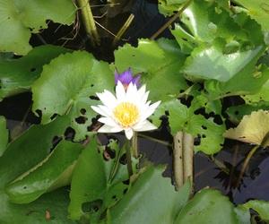 Buddha, flower, and green image
