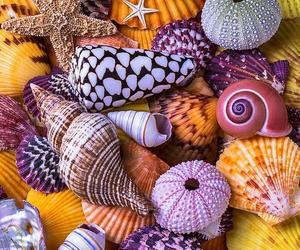 beach, shell, and seashells image
