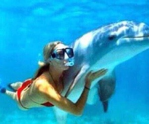 beautiful, marine mammal, and cute image