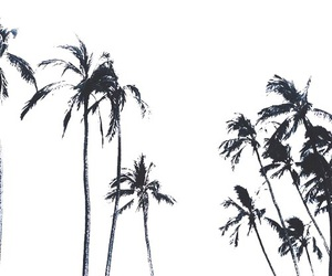 summer, black, and palm trees image