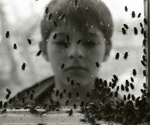 black and white, boy, and flies image