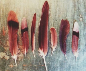 feather, red, and bird image