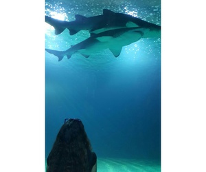 sharks, instagram, and sea image