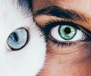 eyes, cat, and blue image