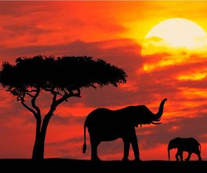 elephant, sunset, and Kenya image