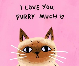 cat, love, and pink image