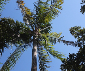 bali, palm, and palm tree image