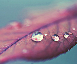 droplets, drops, and focus image