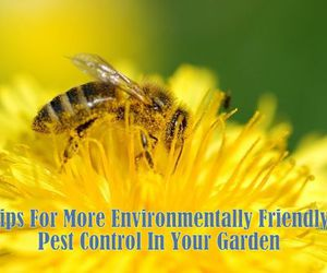 environment, green living, and save the bees image