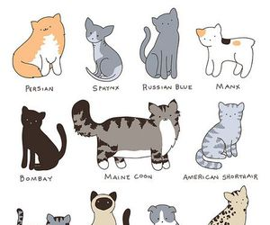 cats, sketch, and art image