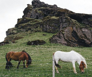 grass, green, and horse image