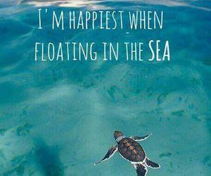 sea, turtle, and happy image