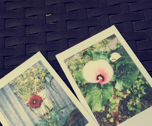 fujifilm, instax, and bloemen image