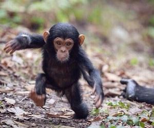monkey, baby, and animal image