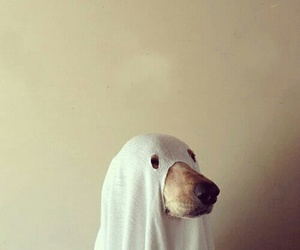 dog, ghost, and scare image