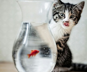 cat, fish, and animal image