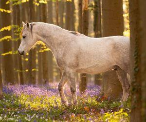 природа, лошадь, and конь image