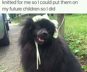 funny, dog, and pets image