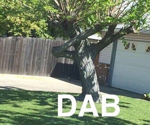 dab, funny, and tree image