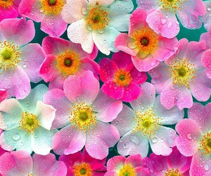 flowers pink image