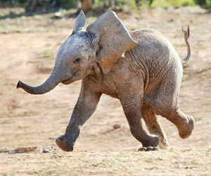 elephant and happy image