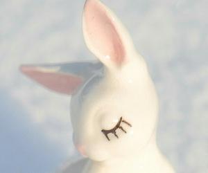 bunny, rabbit, and white image