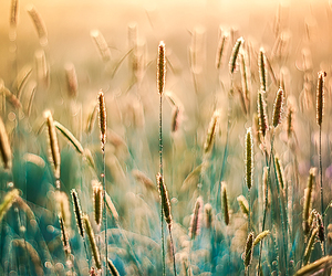 grass, nature, and photography image