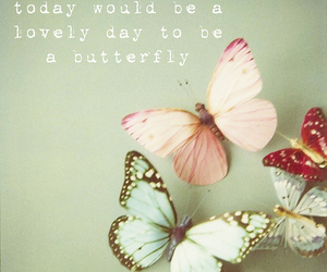 butterfly, quotes, and lovely image