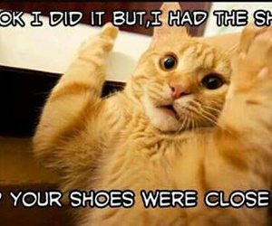 cats, crazy, and funny image
